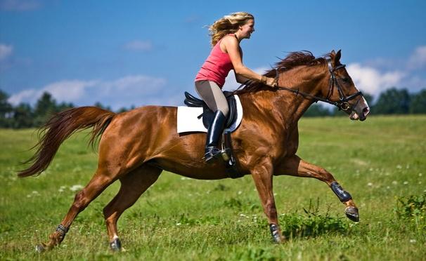 Скидка на Скидка до 63% на конные прогулки для одного или двоих, а также романтические или квест-прогулки на лошадях в будни или выходные от конного двора «Хутор»
